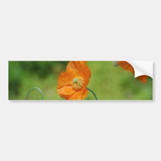 Orange California Poppy Bumper Sticker