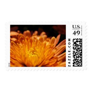 Orange Chrysanthemum Flower Postage Stamps