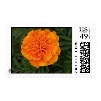 Orange Flower Postage