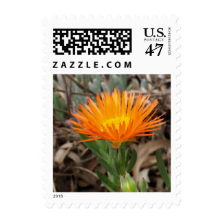 Orange Flowering Cactus Small Postage