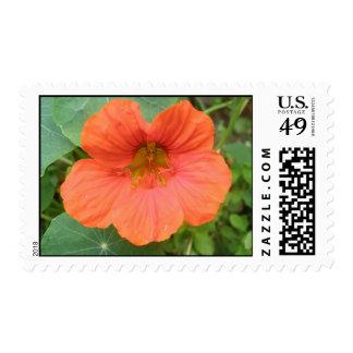 Orange Nasturtium Flower Postage Stamps