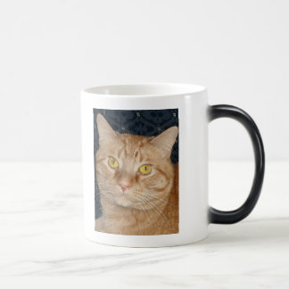 Orange Tabby Cat Morphing Mug