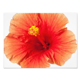 Orange Yellow Hibiscus Tropical Flower Hawaiian Photo Art