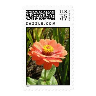 Orange Zinnia Flower Postage Stamps
