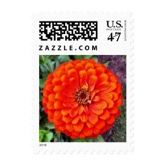 Orange Zinnia Flower USPS Floral Postage Stamps