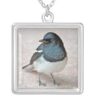 Oriental Magpie-Robin (Copsychus saularis) Square Pendant Necklace