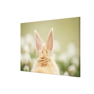 Oryctolagus cuniculus 2 stretched canvas print