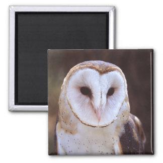 owl square magnet