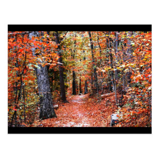 Painted Forest Autumn Trail Watercolor Gifts Postcard