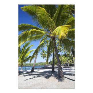 Palm trees, National Historic Park Pu'uhonua o 2 Photo