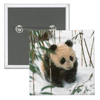 Panda cub on snow, Wolong, Sichuan, China 2 15 Cm Square Badge