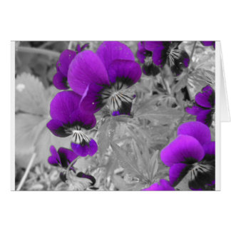 Pansy Effect Greeting Card