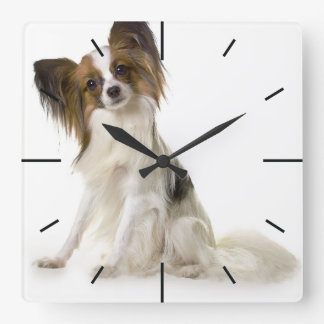 Papillon Puppy interrogative Clocks