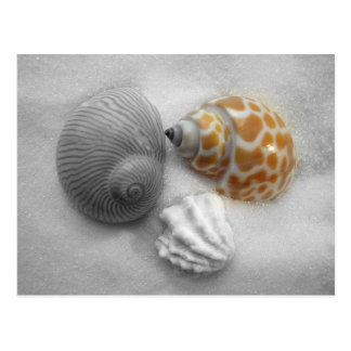 Partial Black and White Seashell Photography Postcard