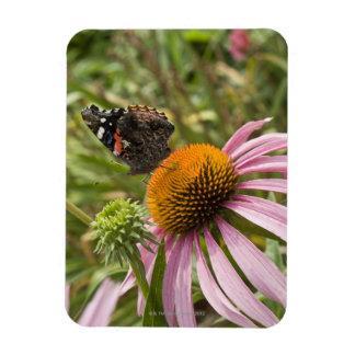 partnership, symbiotic, helping, beauty, rectangular photo magnet
