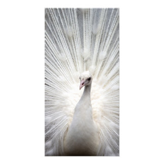 peacock personalized photo card