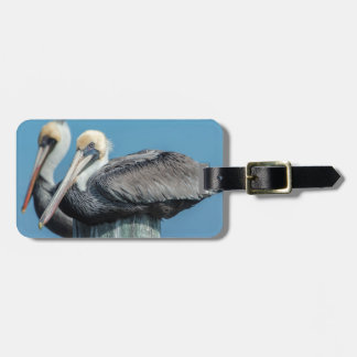 Pelicans roosting on pylon tags for luggage