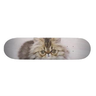 Persian Cat, Felis catus, Brown Tabby, Kitten, Skateboards