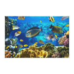 Photo of a tropical Fish on a coral reef Canvas Prints