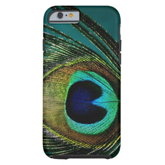 Photography Peacock Feather iPhone 6 case