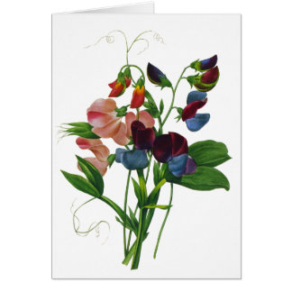 Pink Blue and Purple Sweet Peas by Redoute Greeting Card