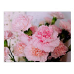 pink carnation flowers vintage style photography postcard