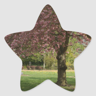Pink flowers of Prunus protect a children castle Star Sticker