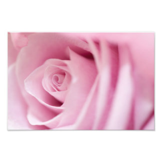 Pink Rose Photo Art