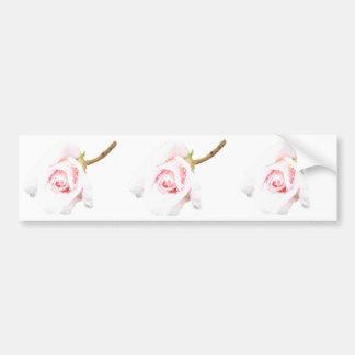 Pink Rose with rain drops Bumper Sticker