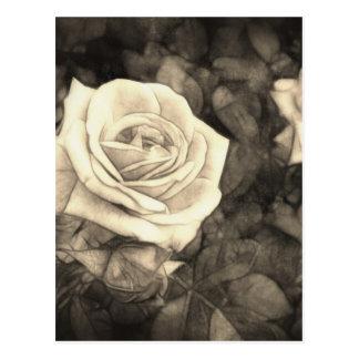 Pink Roses in Anzures 1 Antiqued Postcard