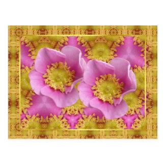 Pink Shrub Roses Postcard