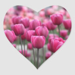 Pink Tulips Stickers