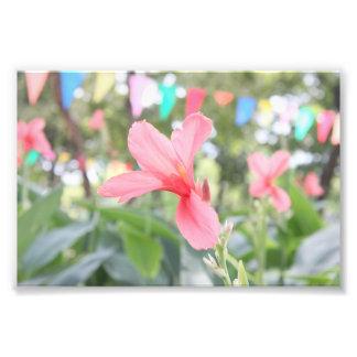 Pinky Flower Art Photo