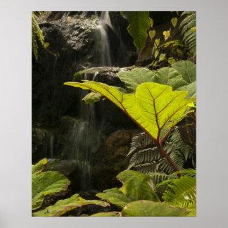Plant detail at a botanical garden, Ecuador Poster