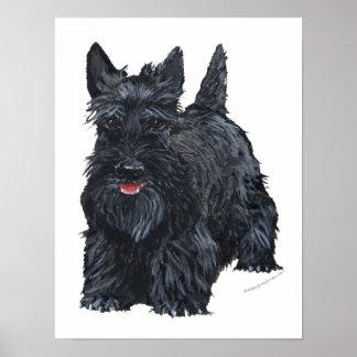 Playful Scottish Terrier Poster