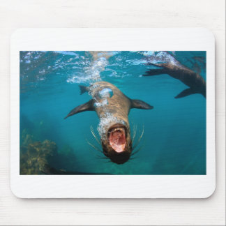 Playful sea lion underwater Galapagos Islands Mouse Pad