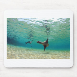 Playful sea lions swim in lagoon Galapagos Islands Mouse Pad