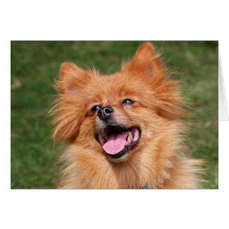 Pomeranian dog greetings card