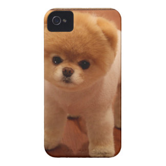 Pomeranian Dog Pet Puppy Small Adorable baby Case-Mate iPhone 4 Cases
