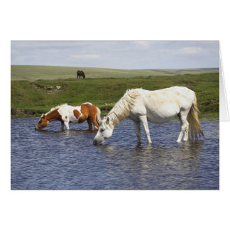 Ponies At Watering Hole blank notelet / card