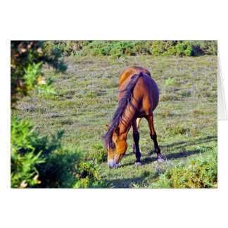 Pony New Forest England Greeting Card