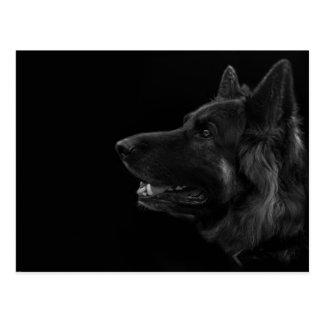 Portrait of a german shepherd dog postcard