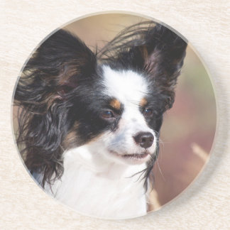 Portrait Of A Papillon Sitting In The Wind Beverage Coasters