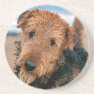 Portrait of an Airedale Terrier 2 Coaster
