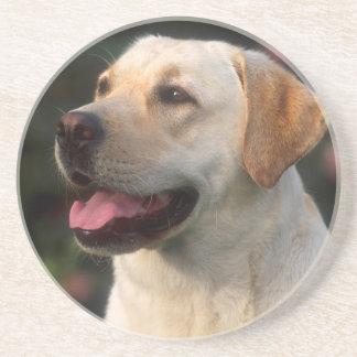 Portrait Of Labrador Retriever, Hilton Drink Coaster