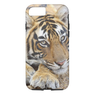 Portrait of Royal Bengal Tiger, Ranthambhor 4 iPhone 7 Case