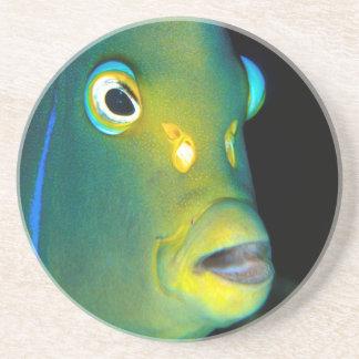 Portrait Of Semicircle Angelfish, Sodwana Bay Coaster