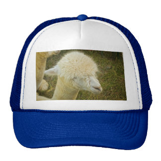 Portrait of White Alpaca Cap