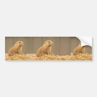 Prarie Dog Ain't I Cute Bumper Sticker