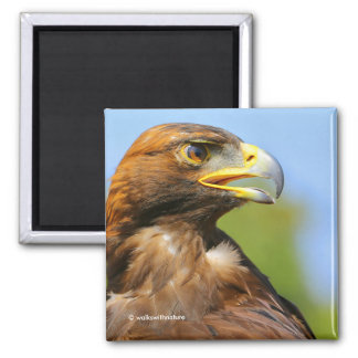Profile of a Golden Eagle in the Summer Sun Square Magnet